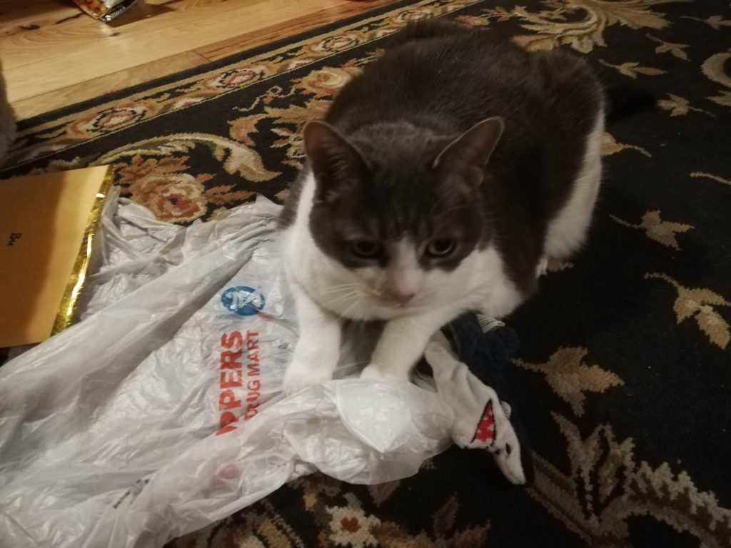 Moss Sugar's front half covers a Shoppers Drug Mart bag, which she appears to be guarding with her life!