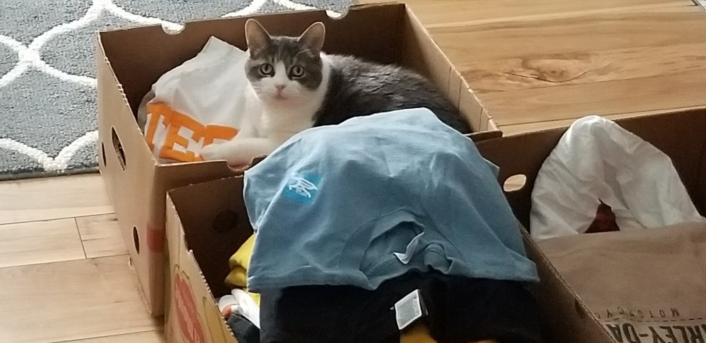 Miss Sugar looks up at the camera as she sits atop an open box of T-shirts. Two more full boxes are in view.