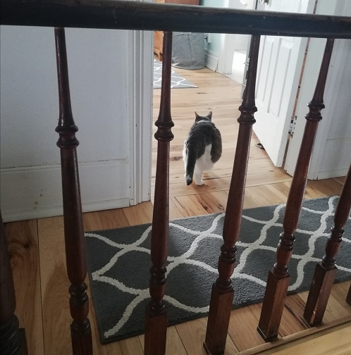Miss Sugar's behind entering the bedroom. The photo is taken from between railing spindles.