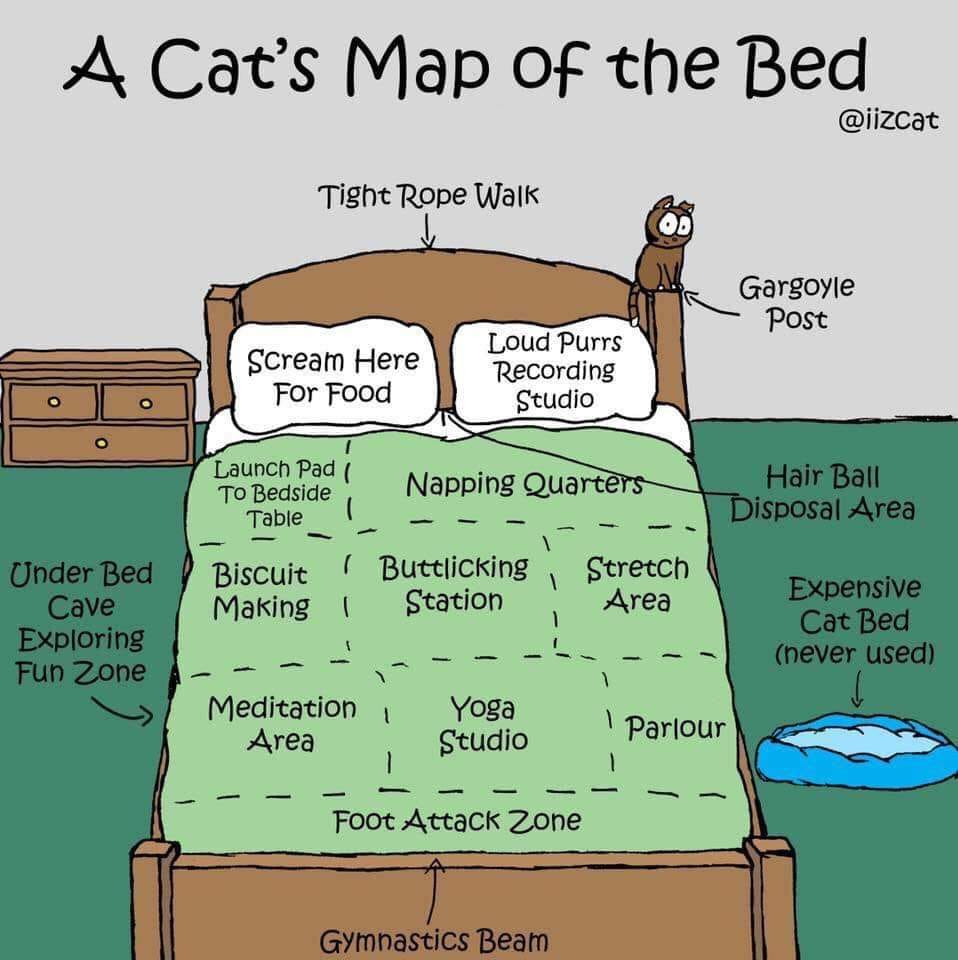 A cartoon rendering of a cat's map of the bed. A pillow is marked, Scream Here for Food. There is a napping quarters, buttlicking station and foot attack zone. Hairball disposal area is between the pillows. Expensive cat bed (never used) is beside the bed.