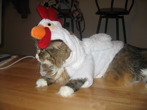 A cat in a chicken costume with the chicken's head resting on the top of the cat's head.