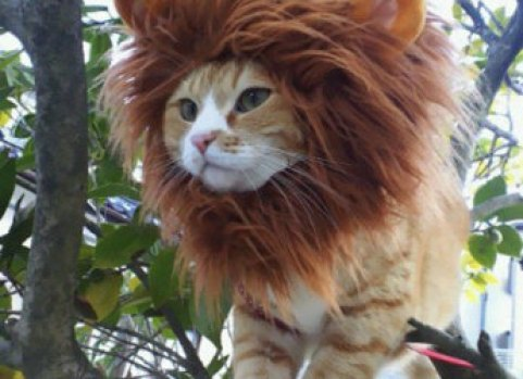 cat in a tree with a lion's mane hood on it