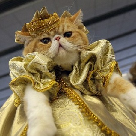 A regal-looking cat wearing a gold, puffy jacket and a gold crown.