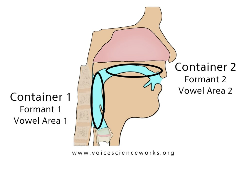 medium resolution of several of the smaller pockets of air in the vocal tract one of them directly above the vocal folds account for the upper formants f3 f4 f5 commonly