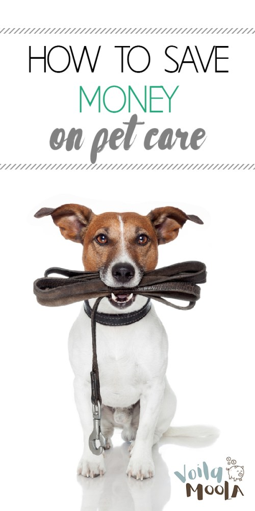save money on pet care | save money | money | pet care | pets | pet owner | savings | furry friends