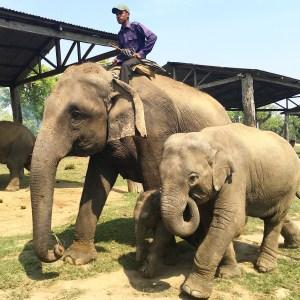 Chitwan National Park, Nepal - Elephant Safari