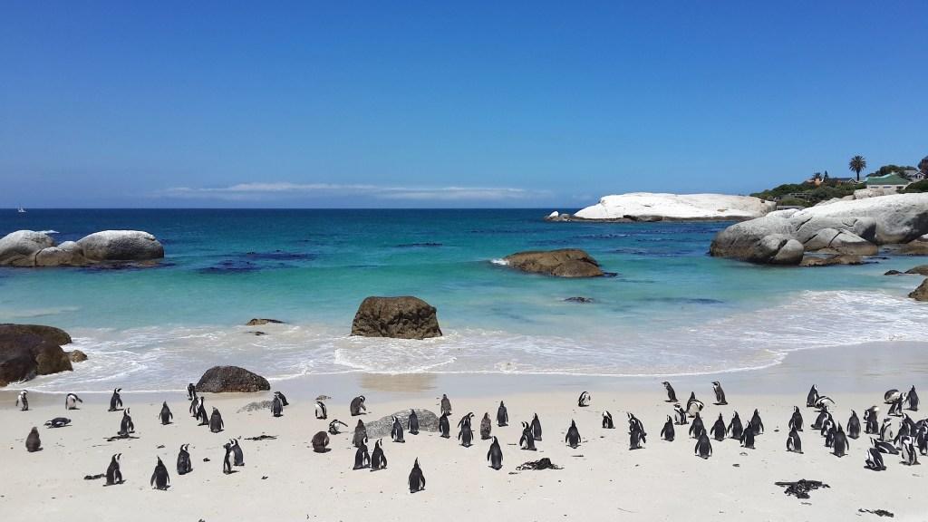 Boulders Beach, Penguins, Cape Peninsula, Cape Town, South Africa