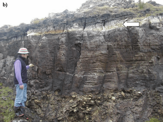 The Kawakawa Tephra at Chatman Island (white arrow). From Katherine Angharad Holt 2008, PhD Thesis, Massey University.