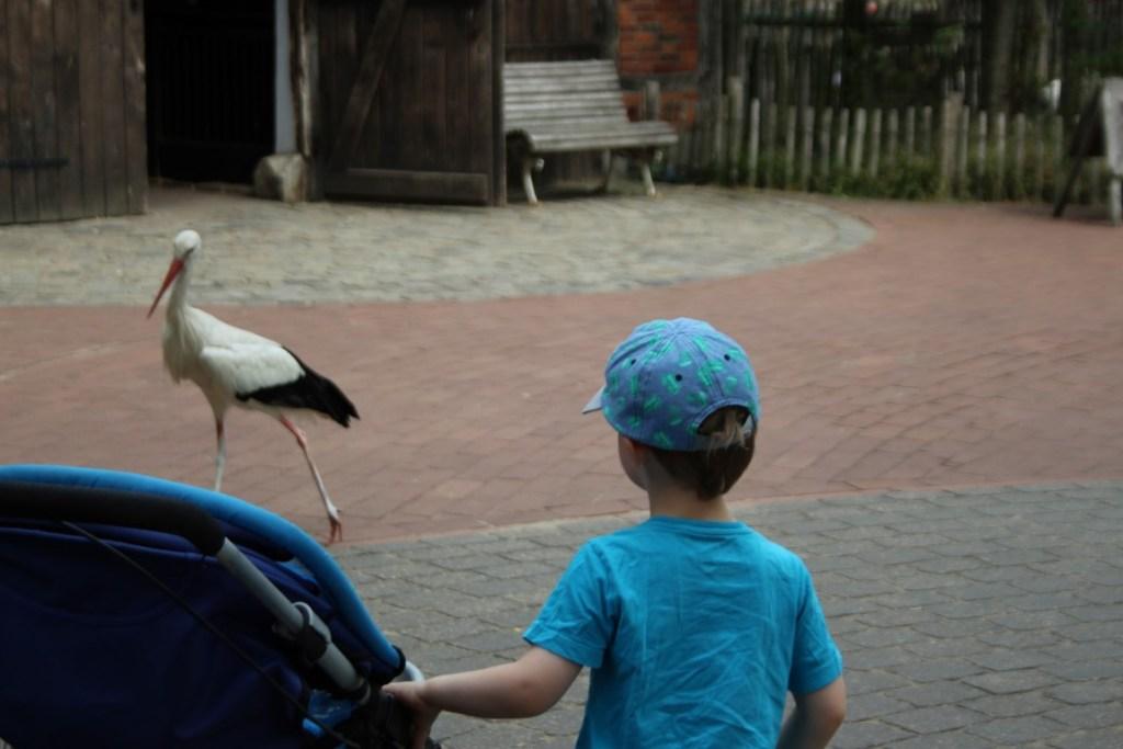 ooievaar dierentuin Nordhorn