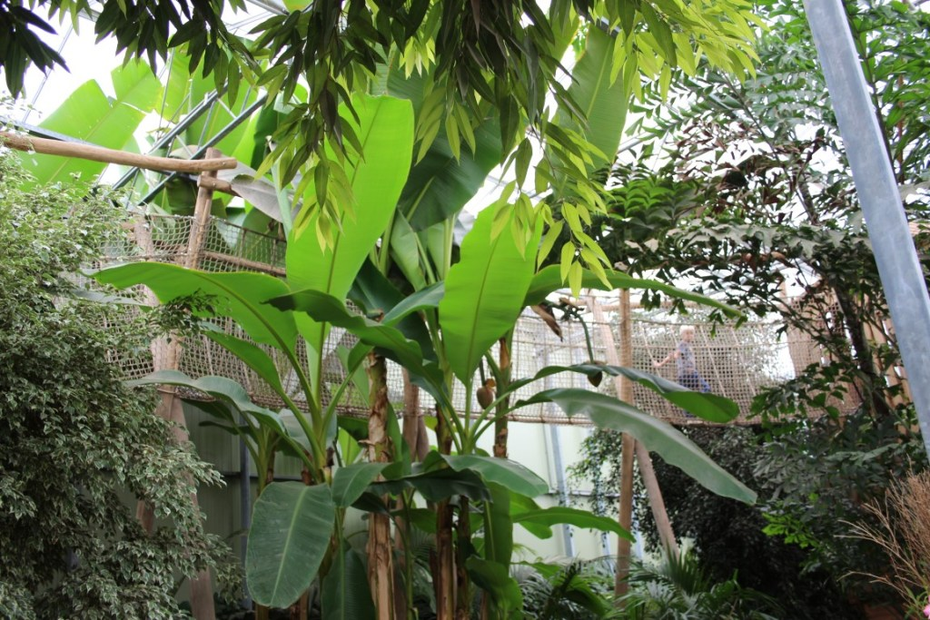 mangrove-speeltuin-flevoland