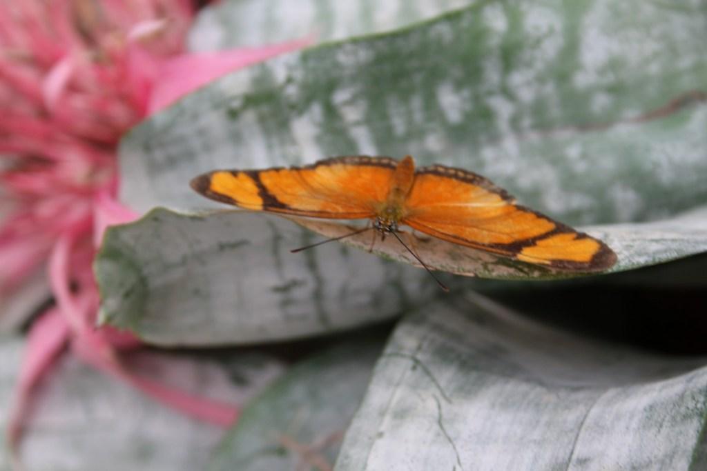 vlindertuin-vlindervallei-orchideeenhoeve