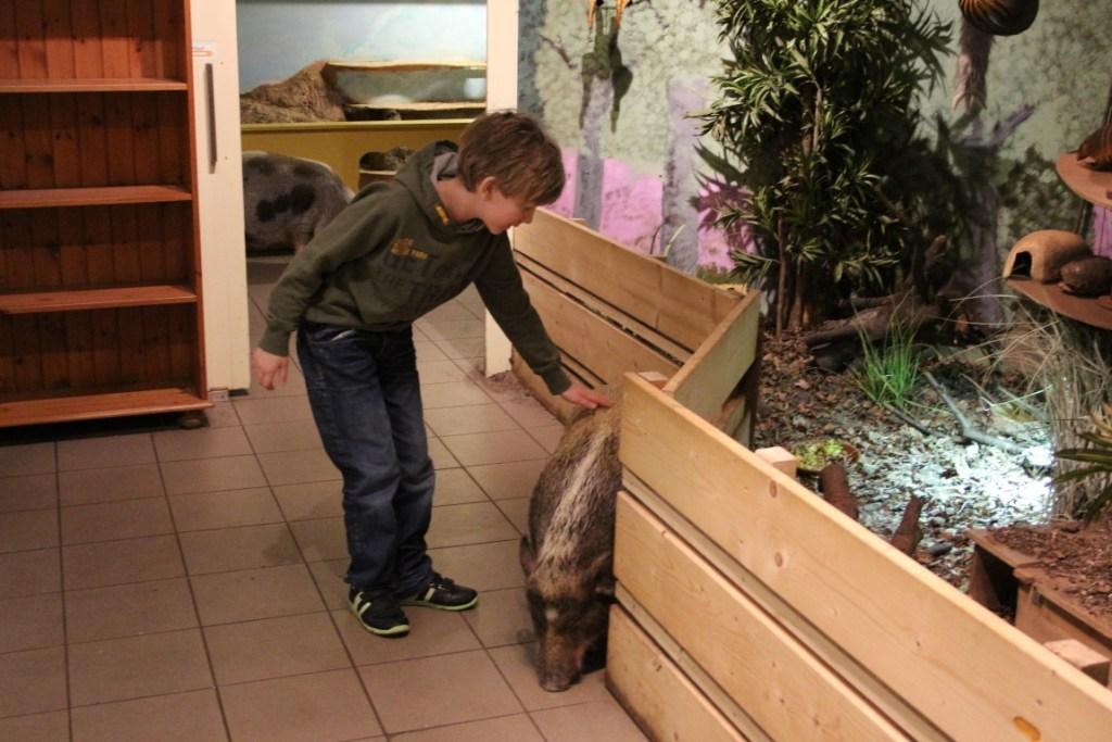 zoo-bizar-drenthe-dierentuin