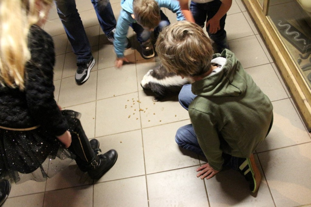 zoo-bizar-drenthe-orvelte-review