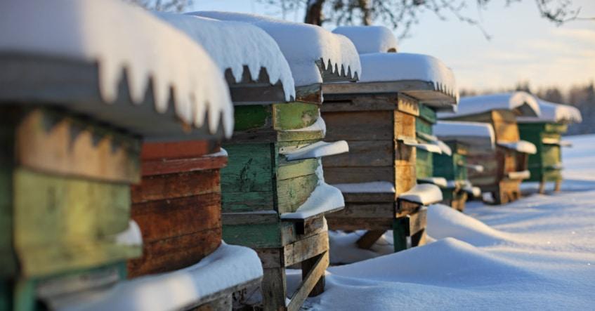 Das Jahr der Bienen 2