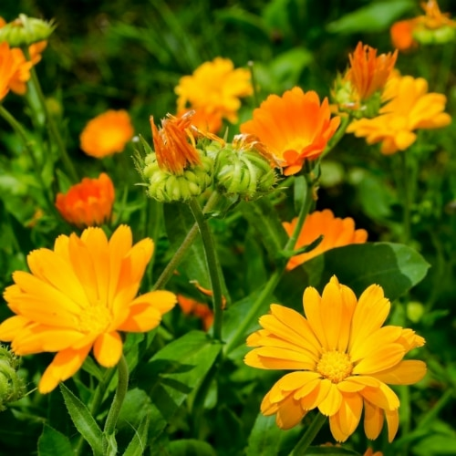 Tipps & Tricks für Bienen-Liebhaber 5