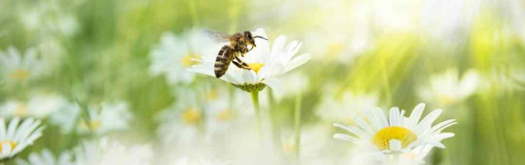 Das Jahr der Bienen 1