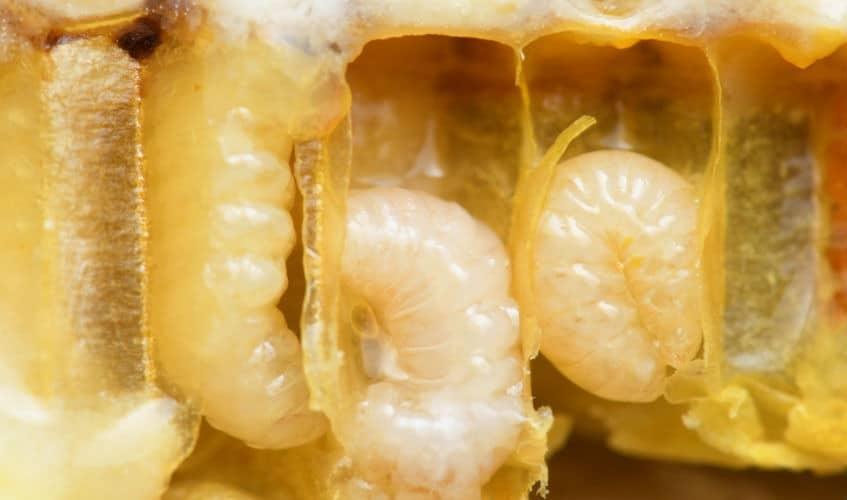 Das Leben aus der Sicht einer Arbeiter-Biene 2