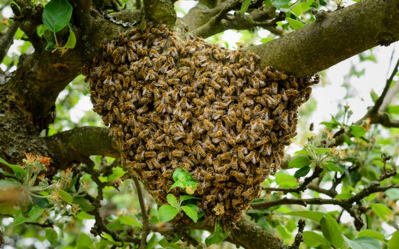 Das Leben einer Bienenkönigin 1