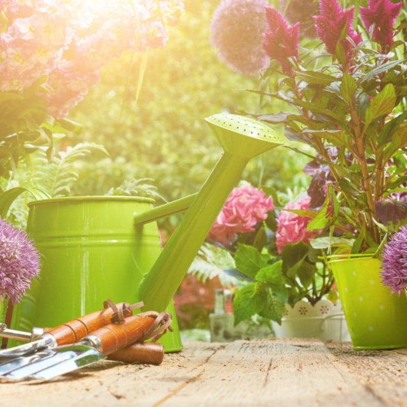 VOLhighspeed Tipps & Tricks für Bienenliebhaber