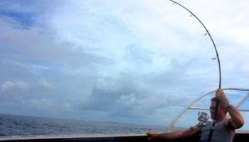 Yellowfin Tuna on light tackle