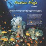 Rediscover Fiji's Pristine Reefs