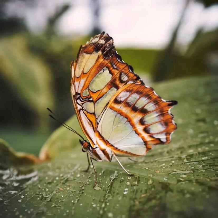 Makrofotografie: Schmetterling