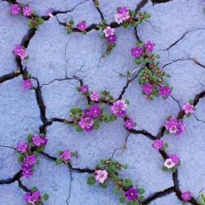 Cvety-v-pustine