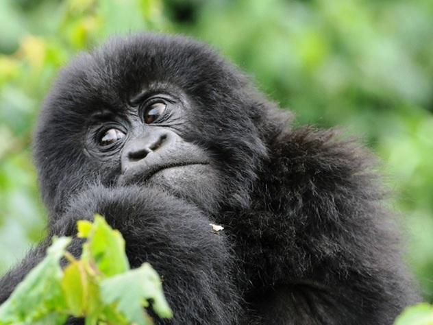 Rwanda un paese da scoprire