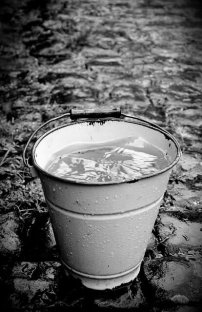 Rainwater in a bucket