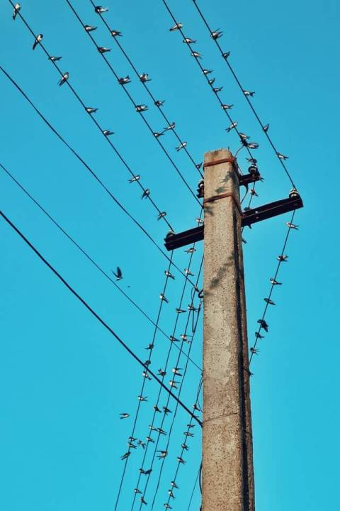 Birds sitting on a live wire without getting electrocuted