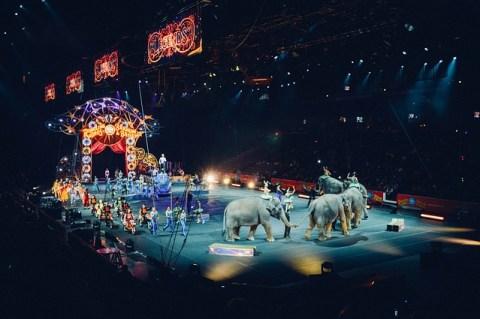 Why did Thomas Edison Electrocute an Elephant- Circus
