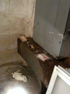 Photo of a wet foundation wall and electrical panel in Powell TN with lots of mold growth.