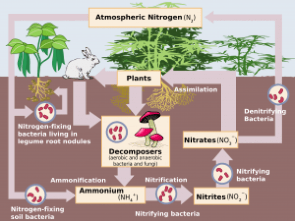 Graphic on how soils can emit high ammonia levels