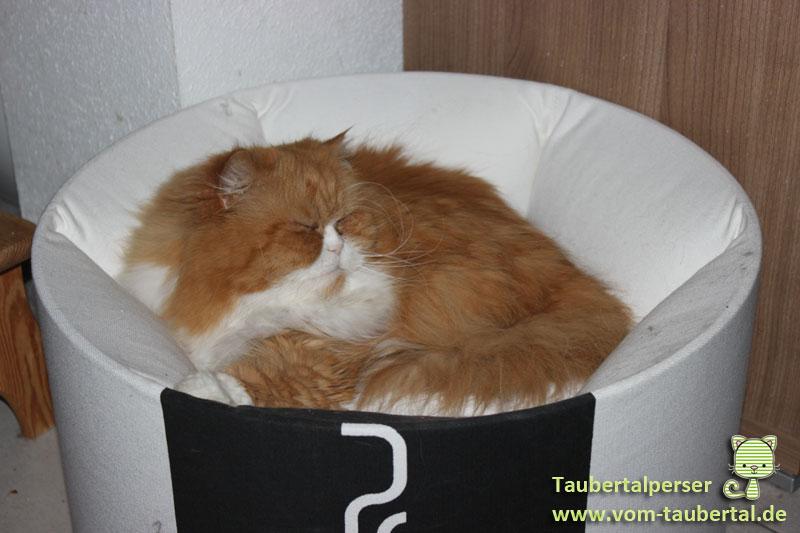 Die richtige Ausstattung fr eure Katze  Taubertalperser