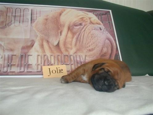 Jolie vom Butjadinger Land