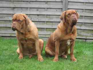 Kamilla und Kleo vom Butjadinger Land