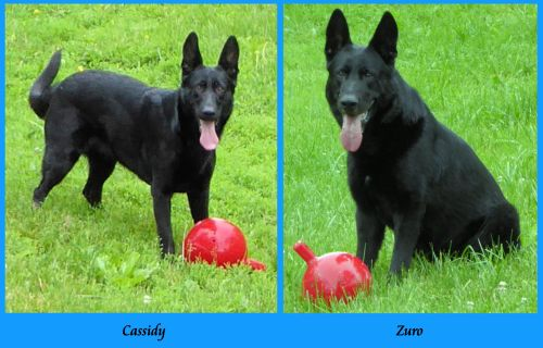 Cassidy and Zuro
