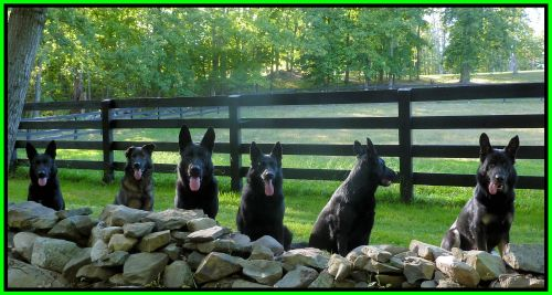 Dogs Out Back Near Rock Wall Framed