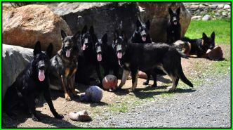 My Pack May 4, 2014 Framed