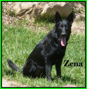 Zena Sitting Photo