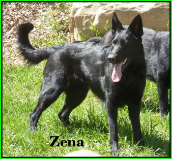 Zena Standing Photo