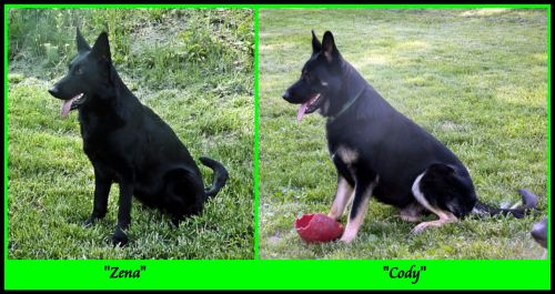 Zena and Cody Sitting