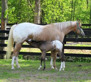 appaloosa-photo-for-journal