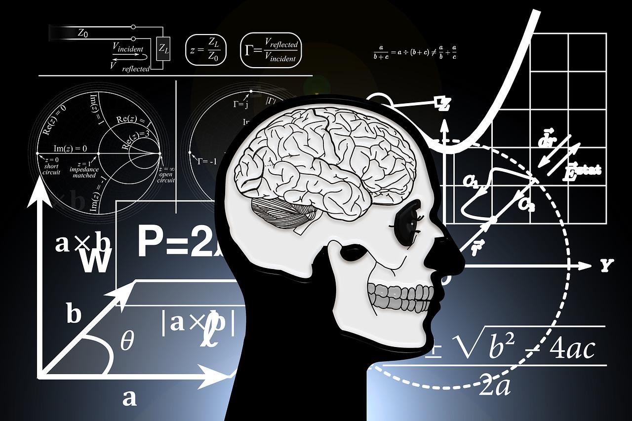 skull and crossbones, skull, brain