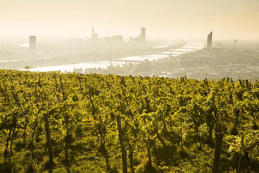 VONsociety: Kattus feiert 160. Geburtstag, Weingarten am Nussberg