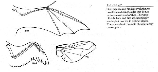 Laurella, J. / Comparative Anatomy