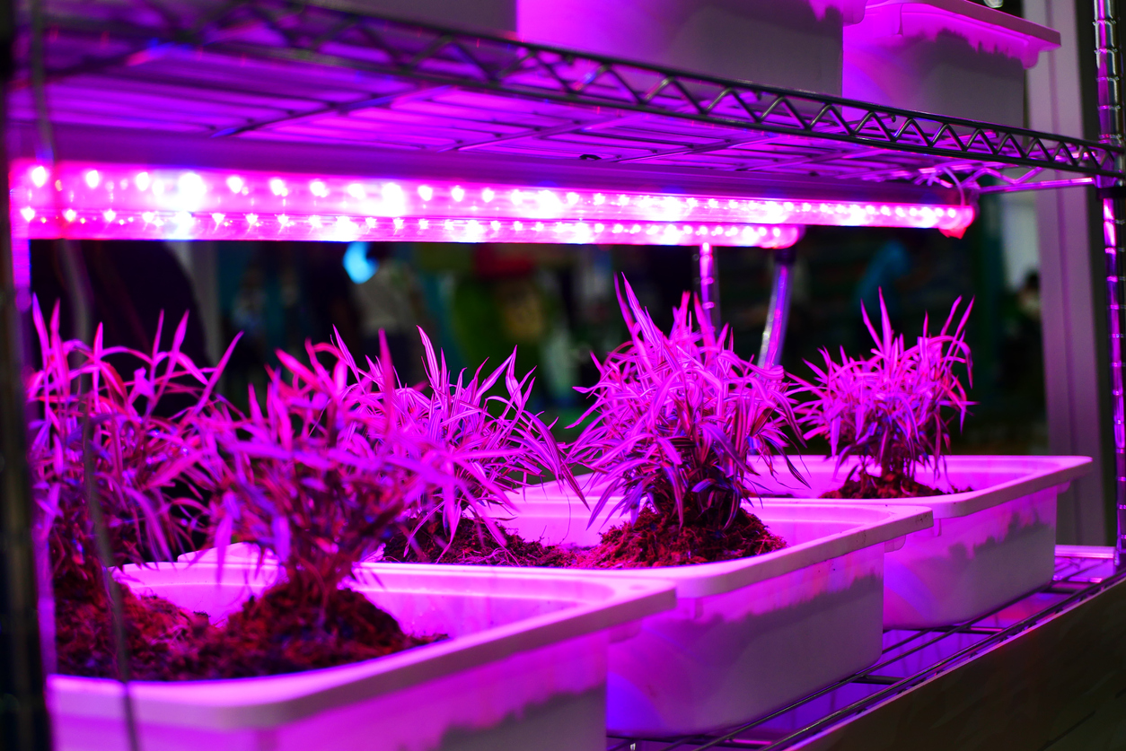 What To Consider While Choosing Led Grow Light Its Time To Boost Business Online