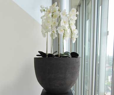 SIA Home kunst orchidee