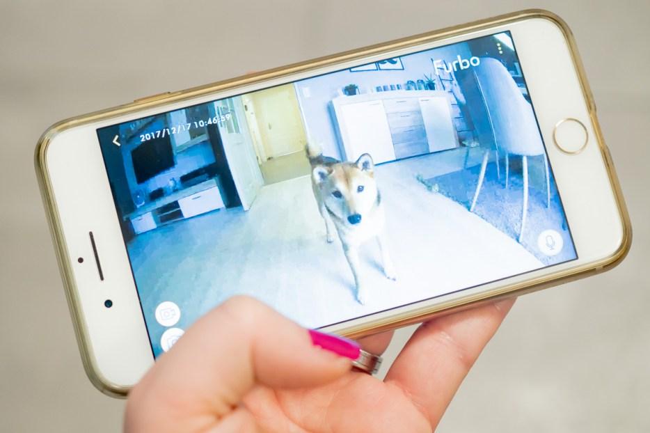 hund alleine zu hause furbo hundekamera app
