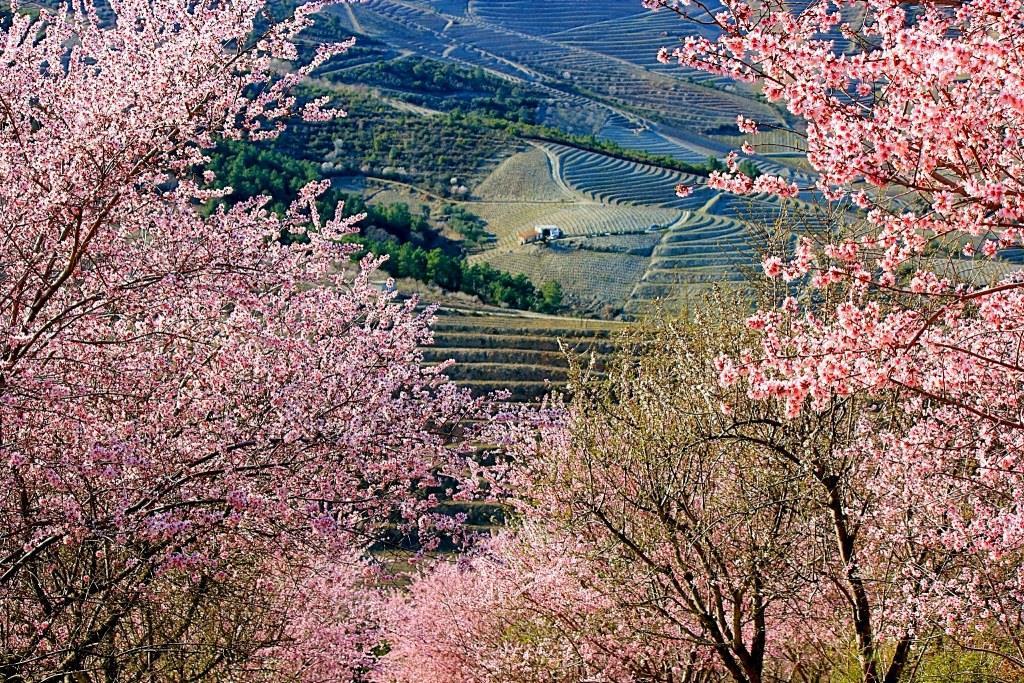 Primavera em Foz Côa - guizel